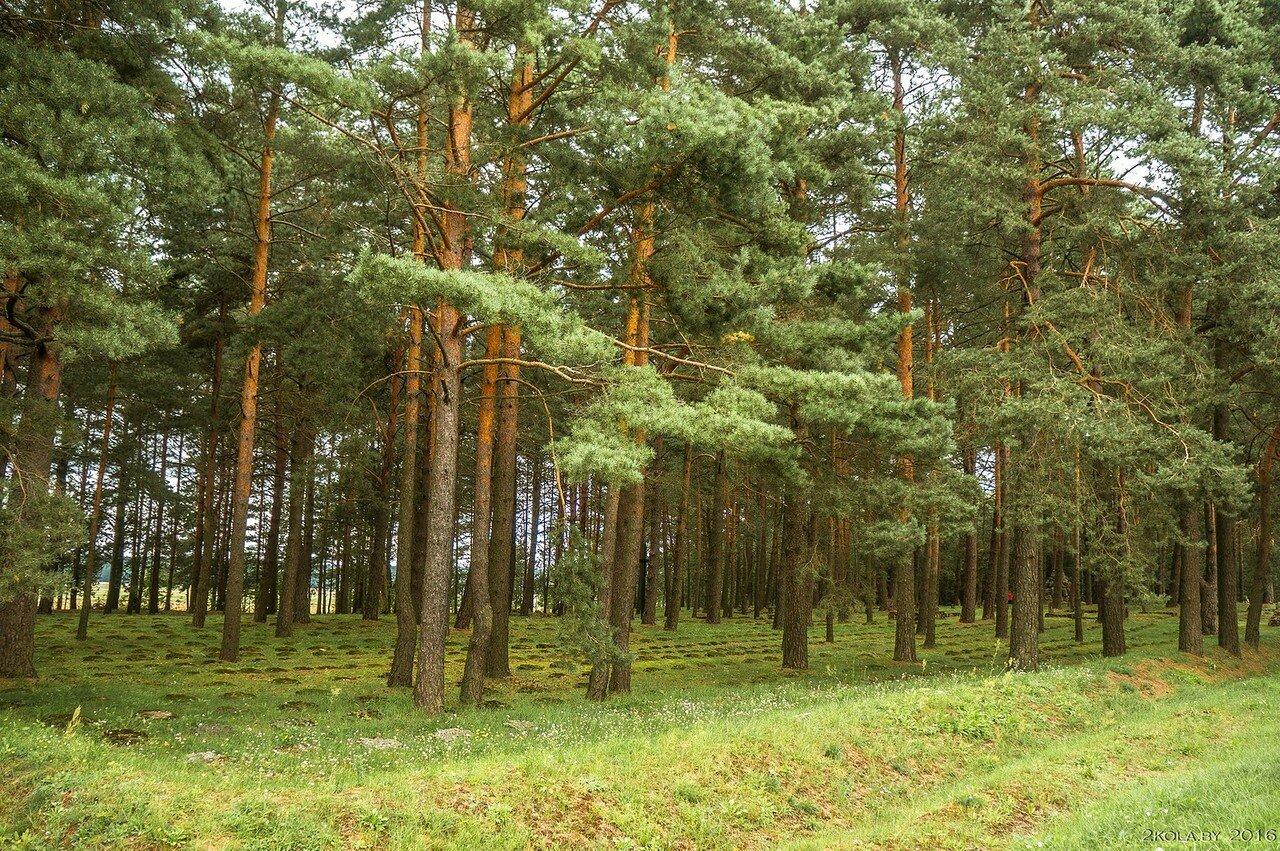 В деревне Проньки находится крупное ухоженное военное кладбище.